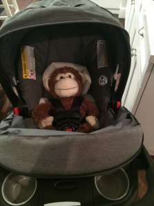 Testing out the stroller straps on Monkey